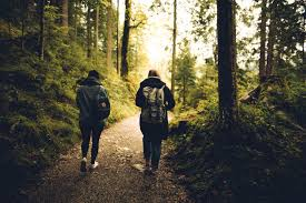 Two People Walking in the Forest · Free Stock Photo